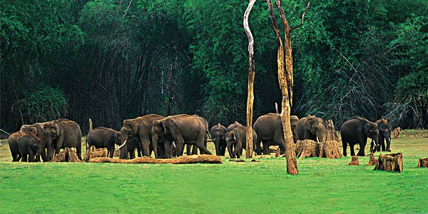 kerala-wildlife-package-tours